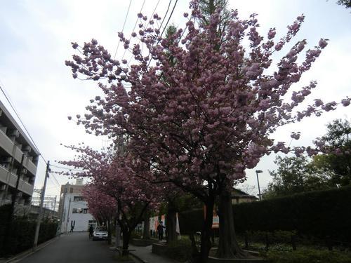 20120420-04.JPG
